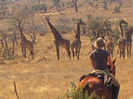 Safaris à cheval